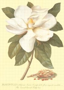 A3 Voorbeeldplaat Magnolia
