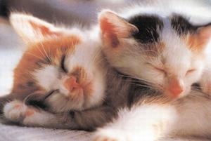 A4 voorbeeldplaten Kattenkwaad