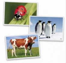 Fotokaarten Dieren