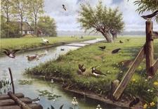 A4 Voorbeeldplaat spp Natuur