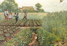 Voorbeeldplaten Het platteland, serie 2