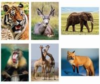 Aqua-schilderen Wilde dieren